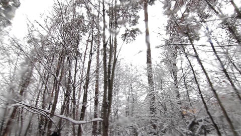 Winter landscape with snow fall off and falls from trees 13 Footage