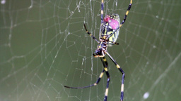 Scary Spider on Webs Footage