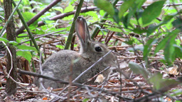 Rabbit in the grass Footage