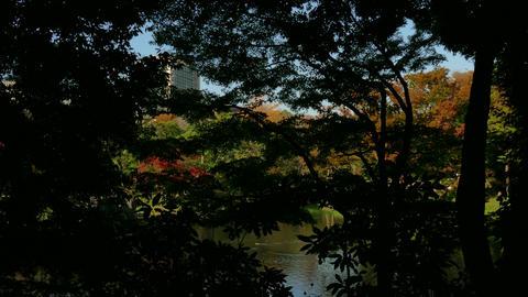 Famous Tourist Spot Koishikawa Korakuen Park Fall Autumn Tokyo Japan Footage