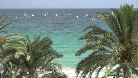 Large group of sailboats and palm trees Footage