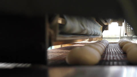 Bread factory production Footage