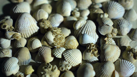 Little, beautiful sea shells with sand and back light, rotation, on black Image