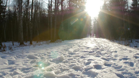 This is a shot of a young couple in love walking in picturesque winter park with Footage