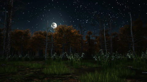 Scary autumn forest at moonlight night Animación