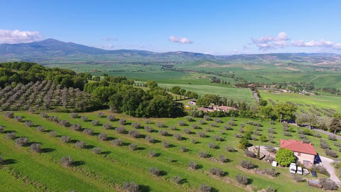 Tuscany aerial landscape with olive trees in Italy Footage