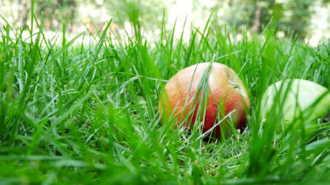 Red And Green Ripe Juicy Apples Roll on the Green Grass Live Action