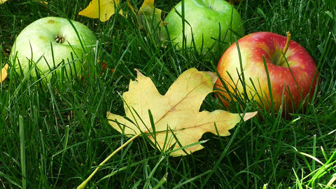 Red Ripe Juicy Apples Falling on the Green Grass Footage