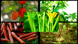 Collage vegetables. Concept of healthy eating and organic farming , 4k Footage