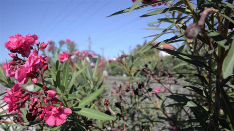 Passing a high-speed train seen among high dry grass. Laugh red oleander flowers Footage