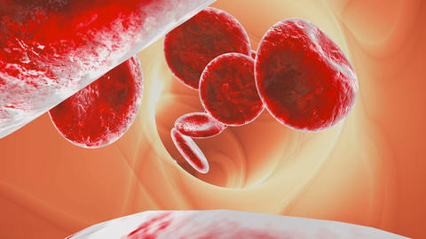 Blood cells traveling through a vein Animation