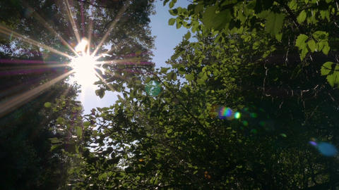 Sun shines through tree leaves Footage