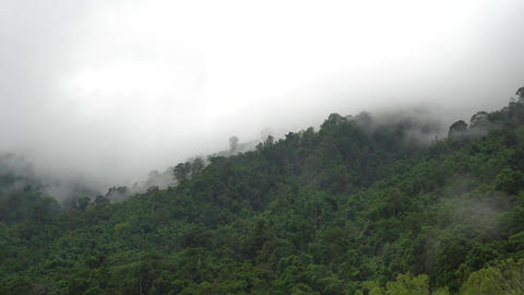 clouds moving over green forest mountain in the morning Filmmaterial
