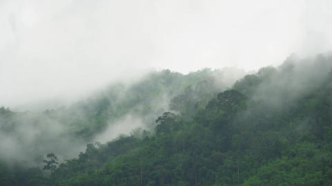 fog moving over green forest mountain in the morning Image