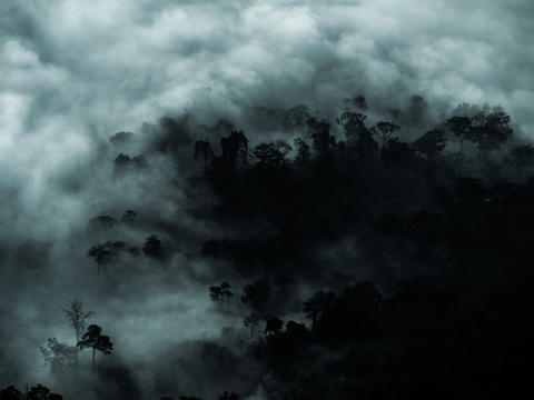 Mysterious forest with fog and dark tree area for copy space Fotografía