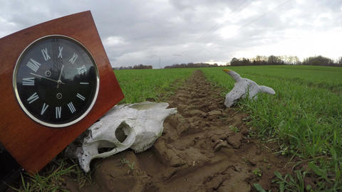 Ancient clock on tractor track and animals skulls on field, time lapse Footage