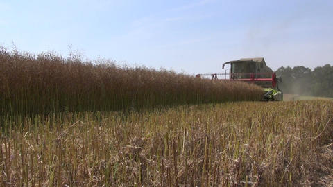 combine harvester harvesting wheat field Footage