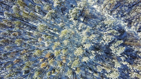 Top view of trees and snow at Lake Baikal Footage