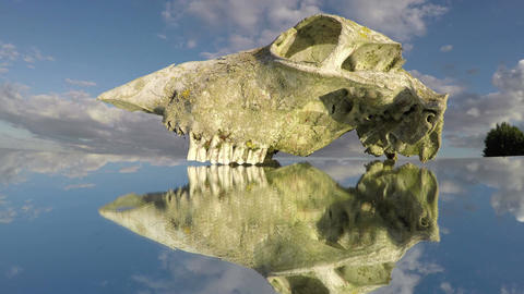 horse skull bone on mirror and clouds motion in space. Time lapse Footage