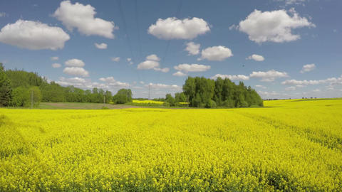 beautiful rapeseed blossoming yellow field and clouds motion. Time lapse Footage