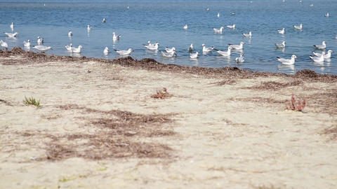 A flock of sea gulls floating on the water Acción en vivo