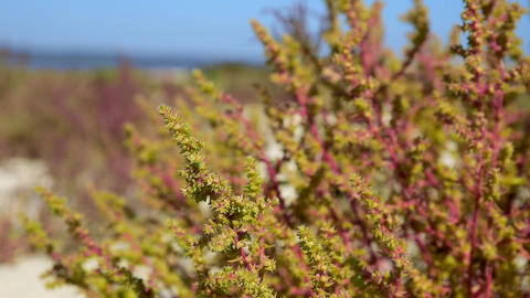 Green bush on a summer day Archivo