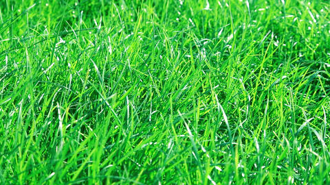 Green grass wavers in the wind Footage