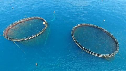 In-shore fisheries Filmmaterial