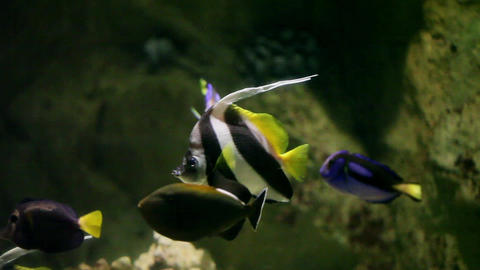 Colourful aquarium fish Footage