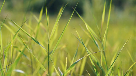 grass in the meadow Footage