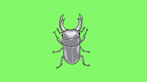 Stag beetle CG動画素材