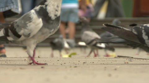 Pigeons in a Square Live Action