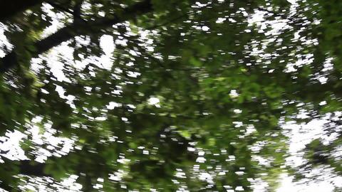 下から見上げた木 ビデオ