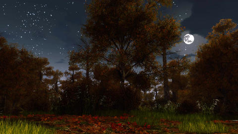 Spooky autumn forest at full moon night Animation