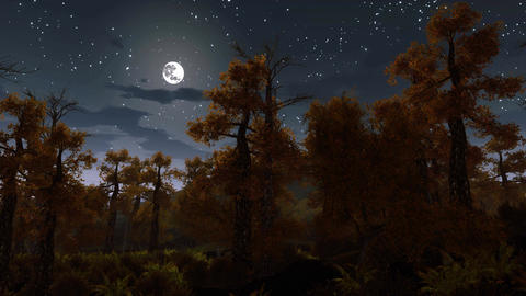 Full moon over spooky autumn night forest Animation