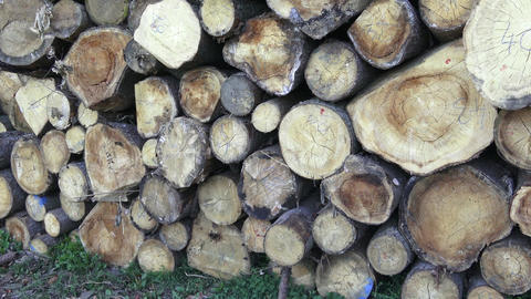 Stack of chopped firewood. Freshly chopped tree logs stacked up on top of each Footage
