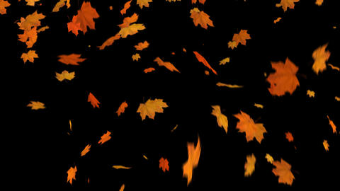 Fall of Leaves Maple Animation