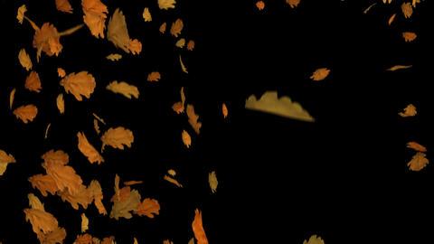 [alt video] Fall of Leaves Oak