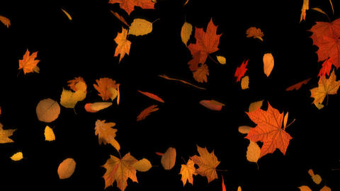 Autumn Fall of Leaves Mixed CG動画素材