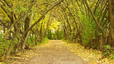 Mystical Autumn alley Live Action