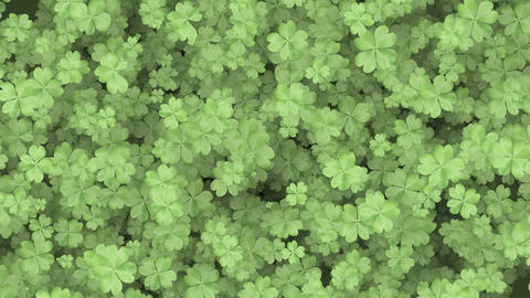 Four Leaf Clover Background Animation