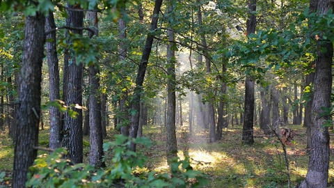 Rays of sunlight shine through the trees on a foggy morning in autumn Footage