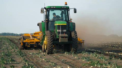 Combine harvester harvest onion Archivo