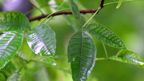 green vegetation on a rainy day Archivo