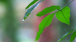green vegetation on a rainy day Image