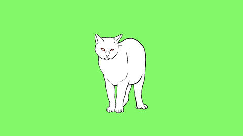 Cat Animation