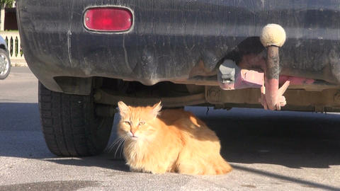 old cat lying in sunlight near car in street Live Action