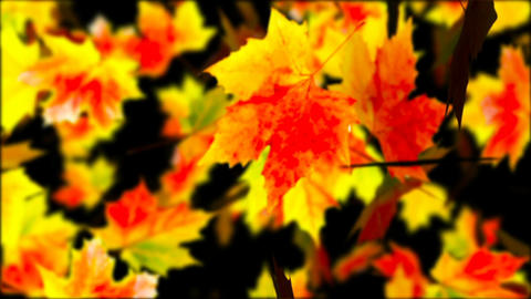Falling Autumn Leaves. Abstract Loopable Background Animation