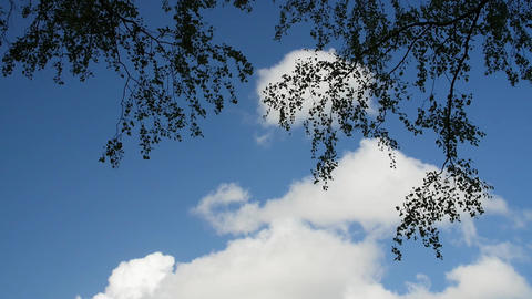 A time lapse video of the sky. Clouds drifting on a sunny day above tree Footage