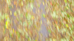 UNSTABLE QUICK MOTION Dead fallen colorful leaves laying on wet road after rain. Footage